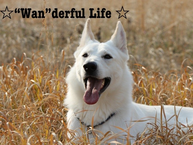 """☆""""Wan""""derful Life ☆  ワンダフルライフ  from Five Star Kennel"""