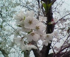 nohachan2007-04-14