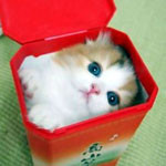 A Kitty in the box