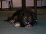 Biribi2007-09-28