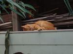 眠り猫。昔は憧れたが今はそうでもない