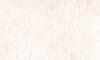 羊皮紙 白桜