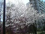 TG大学桜