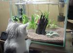 たまには魚が食いたいにゃー。