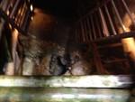 銀鉱洞入り口