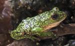 「栃木県なかがわ水遊園」のカエル。