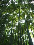 報国寺の竹林で見上げてみる
