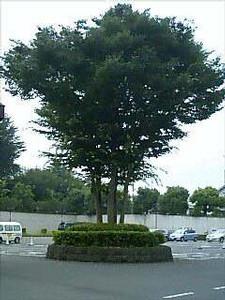 NATSUCO2006-07-29