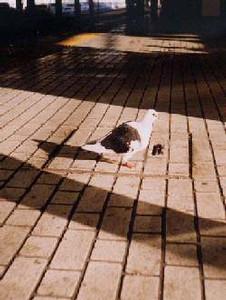 NATSUCO2006-08-16