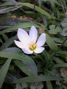 NATSUCO2006-09-18