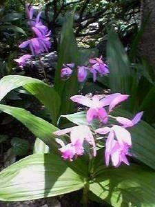 NATSUCO2007-05-19