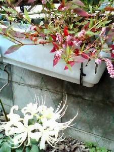 NATSUCO2011-10-05