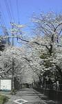 NCOM2010-03-30