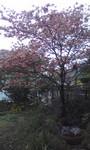 NCOM2010-04-21