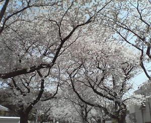 RYOJI2009-04-06