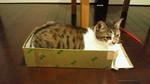 RYOJI2011-01-27