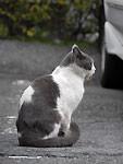 ニャンニャンニャンの猫の日
