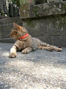 千本鳥居の猫 その5