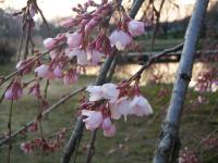 TREKNAO2011-04-16
