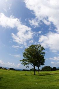 大湯環状列石公園