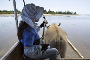 由布島に渡る水牛車