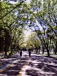 Willowroad2011-07-10