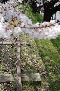 asacafe2008-04-05