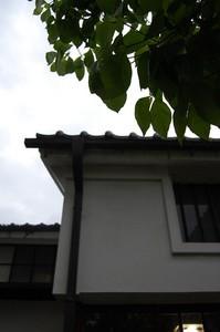 asacafe2008-06-01