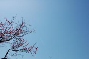 asacafe2011-04-05