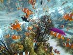 六本木ヒルズの魚たち
