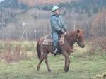 ドサンコ馬