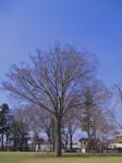 bluemoonbell2005-03-27