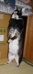 bluemoonbell2005-10-05