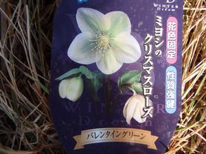 bluemoonbell2007-02-01