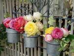 庭で咲いた薔薇たち
