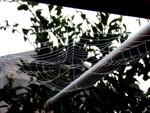 美しい模様の蜘蛛の巣