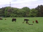 八甲田憩いの牧場