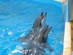 浅虫水族館のイルカ