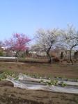 bousisensei2006-03-11