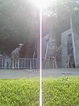 東山動物園は俺の庭