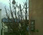 bousisensei2007-11-28