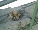 bousisensei2008-03-13