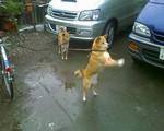 bousisensei2008-03-20