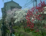 bousisensei2008-04-08