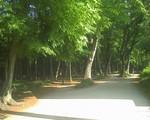 bousisensei2009-05-11