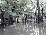 湿地帯か!