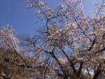 bousisensei2013-03-22