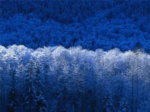 bragelone2005-02-15