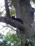 木登り猫。