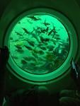 西帰浦の海を泳ぐ魚たち